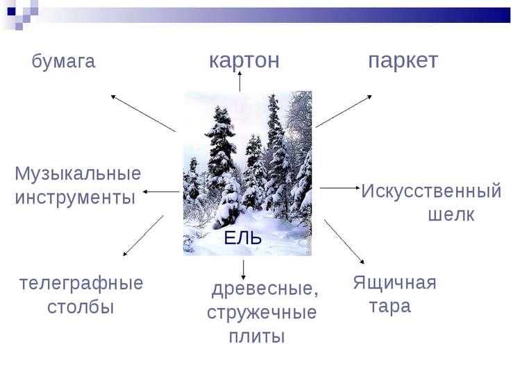 Презентация На Тему Охрана Растительного И Животного Мира