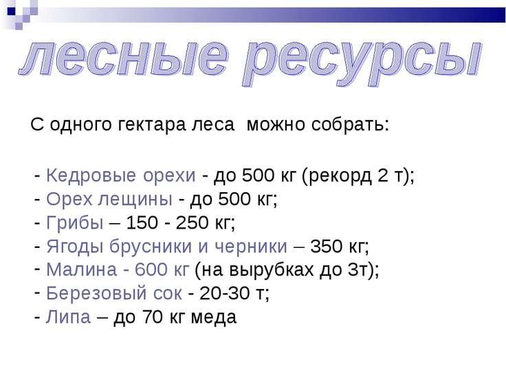 С одного гектара леса можно собрать: - Кедровые орехи - до 500 кг (рекорд 2 т...