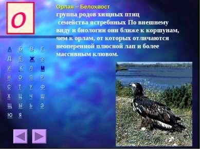 Орлан – Белохвост группа родов хищных птиц семейства ястребиных По внешнему в...