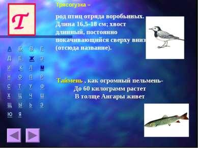 Трясогузка – род птиц отряда воробьиных. Длина 16,5-18 см; хвост длинный, пос...