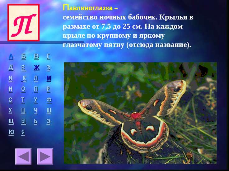Павлиноглазка – семейство ночных бабочек. Крылья в размахе от 7,5 до 25 см. Н...