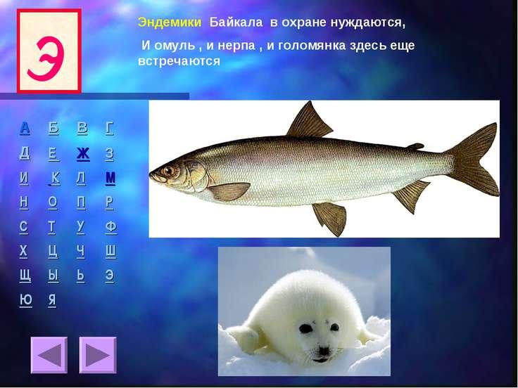Эндемики Байкала в охране нуждаются, И омуль , и нерпа , и голомянка здесь ещ...
