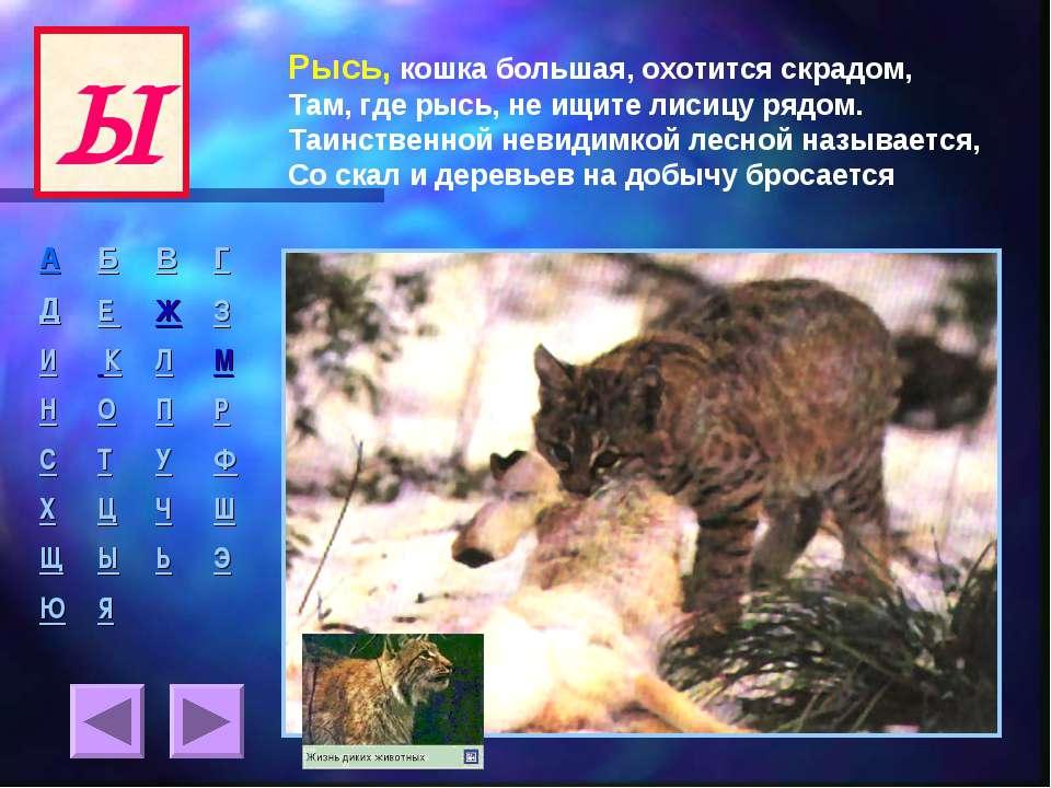 Рысь, кошка большая, охотится скрадом, Там, где рысь, не ищите лисицу рядом. ...