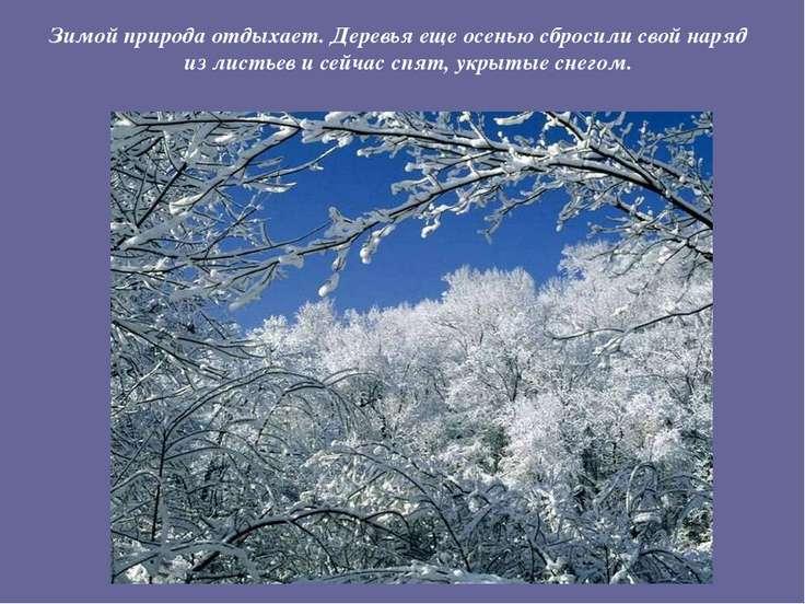 Зимой природа отдыхает. Деревья еще осенью сбросили свой наряд из листьев и с...