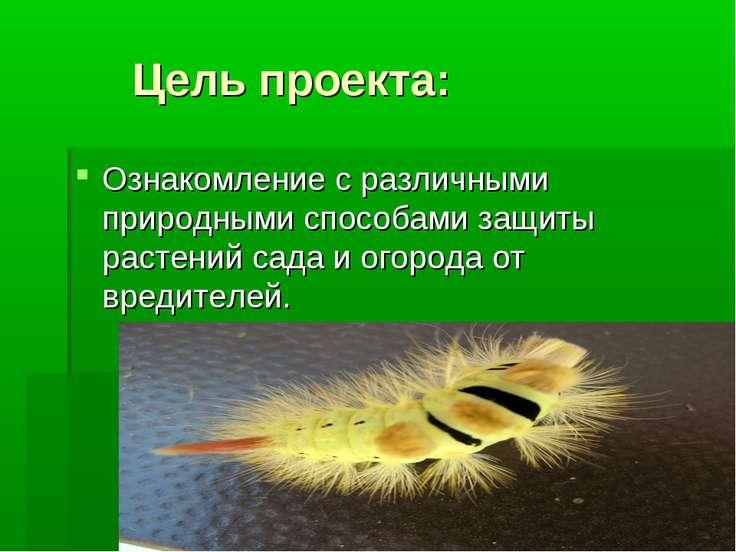 Цель проекта: Ознакомление с различными природными способами защиты растений ...