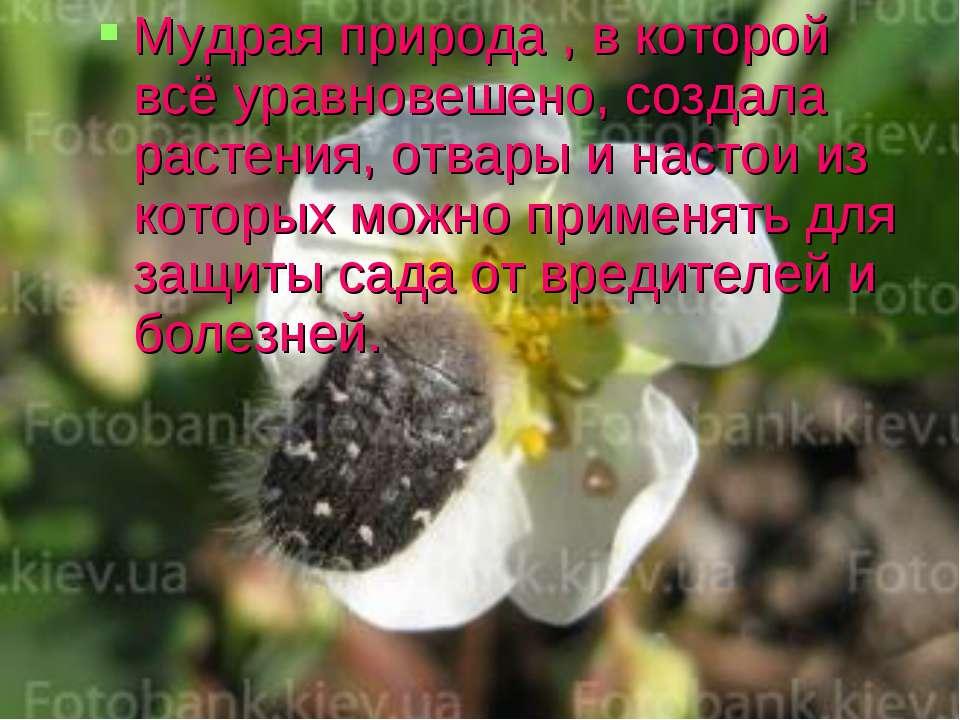 Мудрая природа , в которой всё уравновешено, создала растения, отвары и насто...