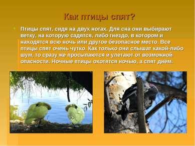 Как птицы спят? Птицы спят, сидя на двух ногах. Для сна они выбирают ветку, н...