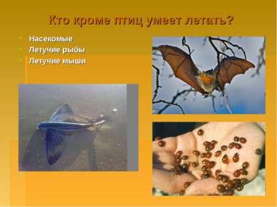 Кто кроме птиц умеет летать? Насекомые Летучие рыбы Летучие мыши