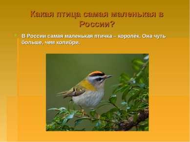 Какая птица самая маленькая в России? В России самая маленькая птичка – корол...