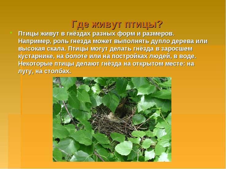 Где живут птицы? Птицы живут в гнёздах разных форм и размеров. Например, роль...