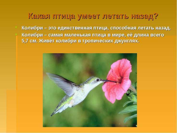 Какая птица умеет летать назад? Колибри – это единственная птица, способная л...