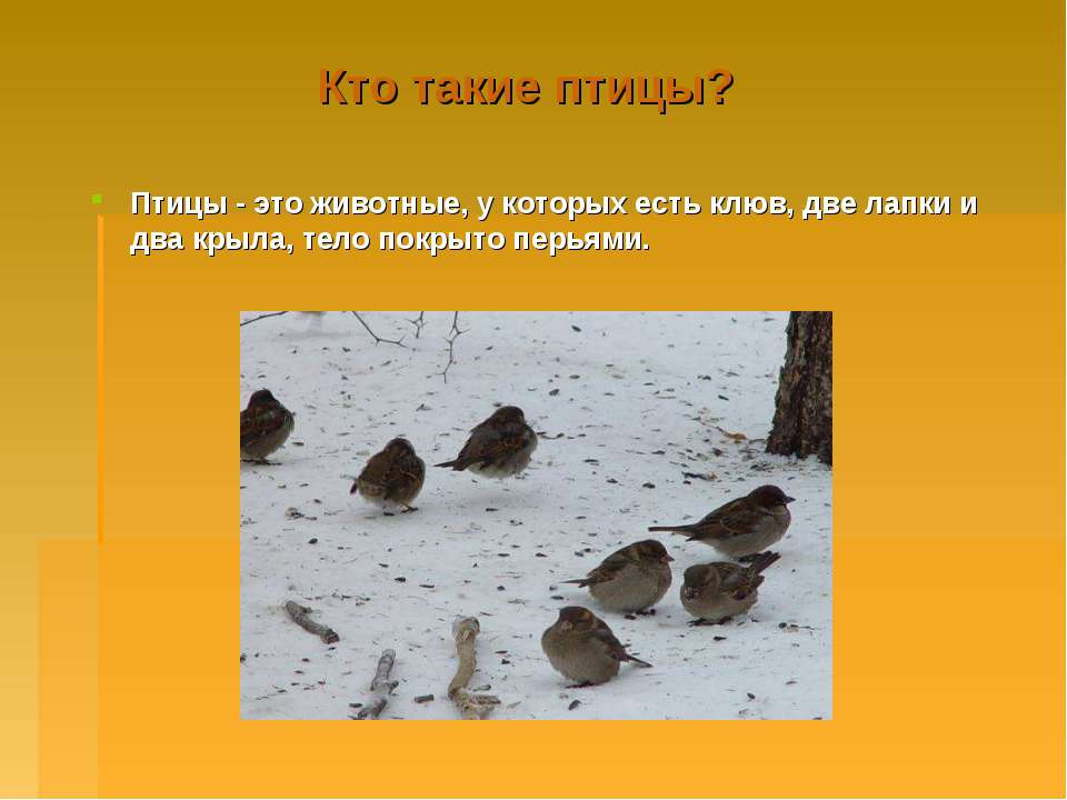 Кто такие птицы? Птицы - это животные, у которых есть клюв, две лапки и два к...