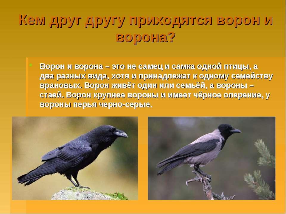 Кем друг другу приходятся ворон и ворона? Ворон и ворона – это не самец и сам...