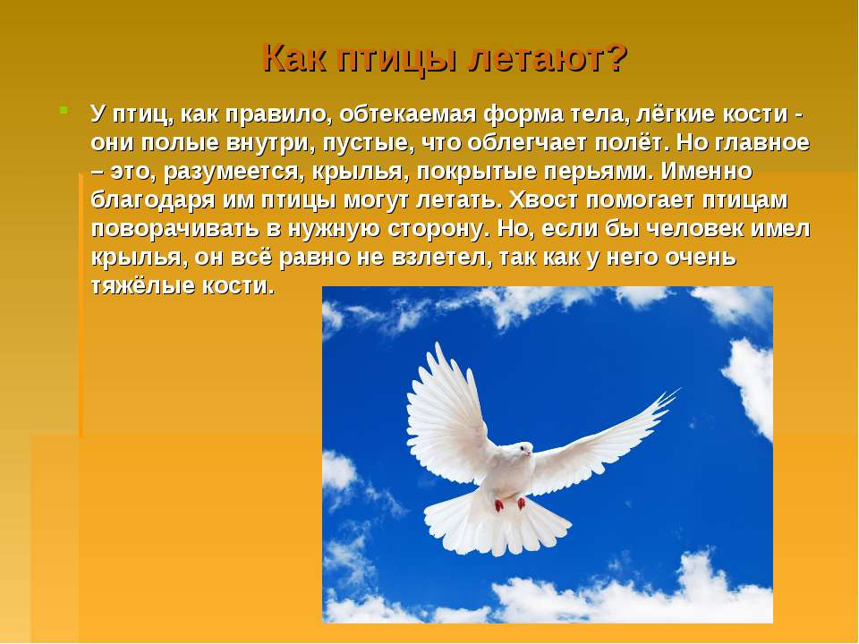 Как птицы летают? У птиц, как правило, обтекаемая форма тела, лёгкие кости - ...