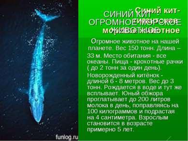 Синий кит- гигантское морское животное СИНИЙ КИТ - ОГРОМНОЕ МОРСКОЕ ЖИВОТНОЕ ...