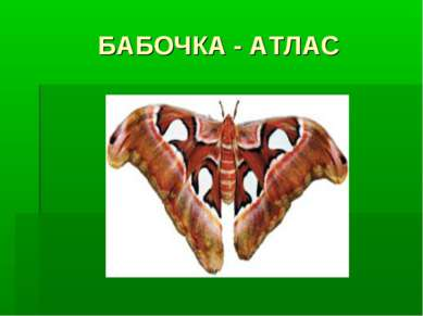 БАБОЧКА - АТЛАС