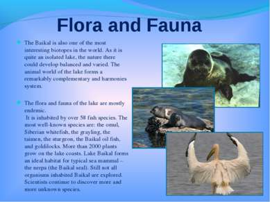 Flora and Fauna The Baikal is also one of the most interesting biotopes in th...