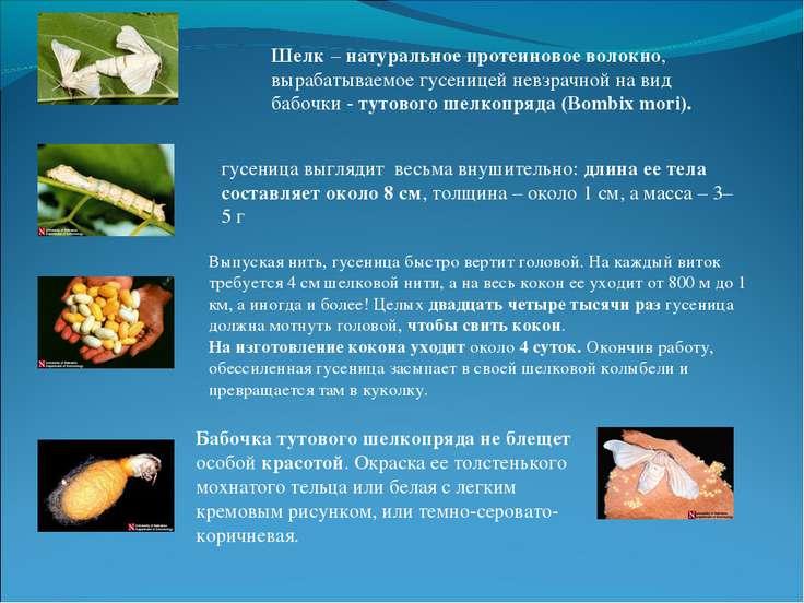 Шелк – натуральное протеиновое волокно, вырабатываемое гусеницей невзрачной н...