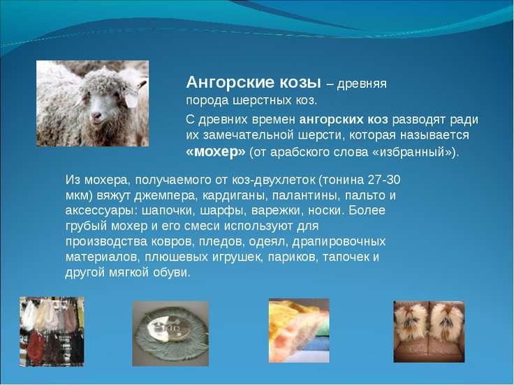 Ангорские козы – древняя порода шерстных коз. С древних времен ангорских коз ...