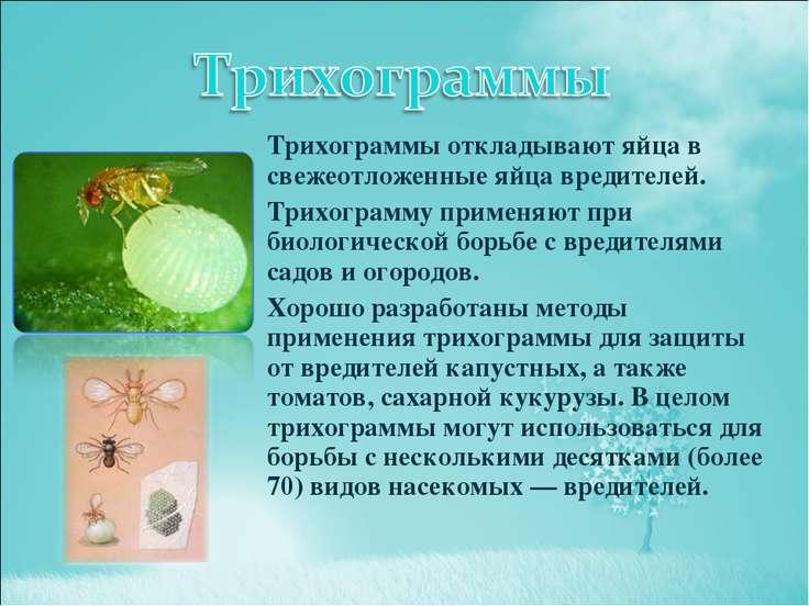 Презентация насекомые вредители поля и огорода биология