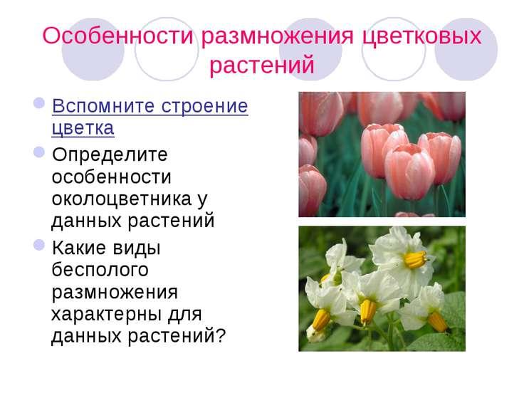 Особенности размножения цветковых растений Вспомните строение цветка Определи...