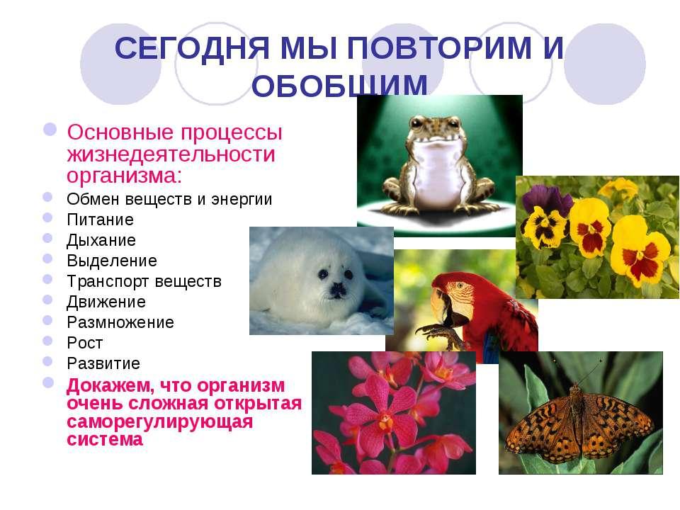 СЕГОДНЯ МЫ ПОВТОРИМ И ОБОБЩИМ Основные процессы жизнедеятельности организма: ...