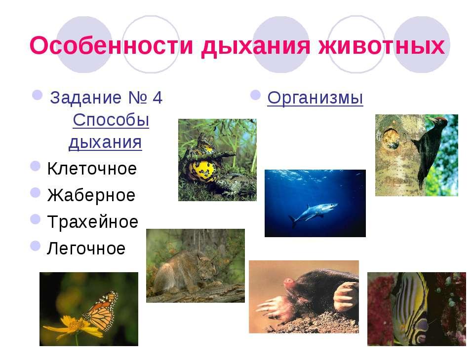 Особенности дыхания животных Задание № 4 Способы дыхания Клеточное Жаберное Т...