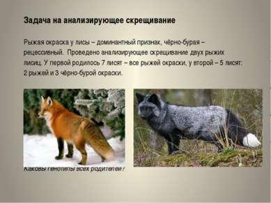 Задача на анализирующее скрещивание Рыжая окраска у лисы – доминантный призна...