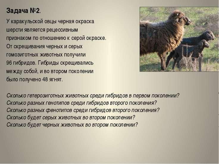 Задача №2. У каракульской овцы черная окраска шерсти является рецессивным при...