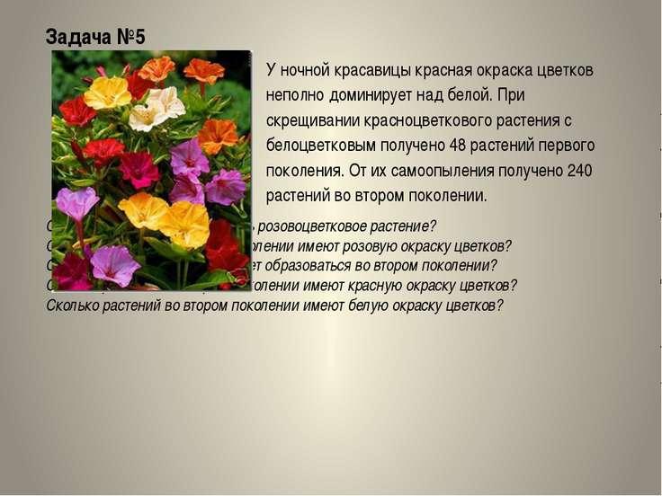 Задача №5 У ночной красавицы красная окраска цветков неполно доминирует над б...