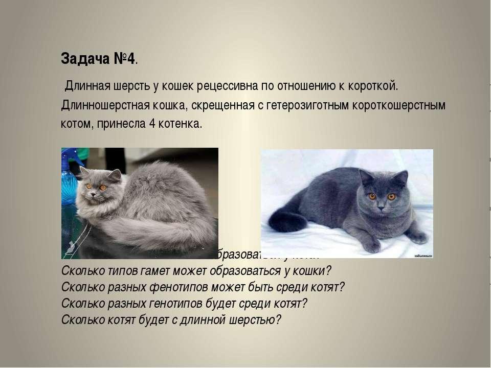 Задача №4. Длинная шерсть у кошек рецессивна по отношению к короткой. Длиннош...