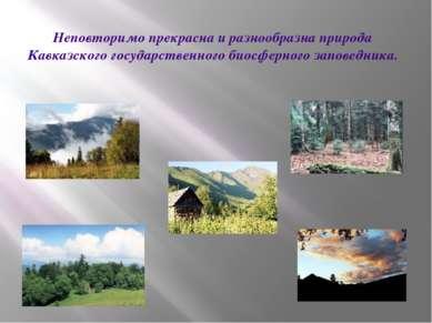 Неповторимо прекрасна и разнообразна природа Кавказского государственного био...