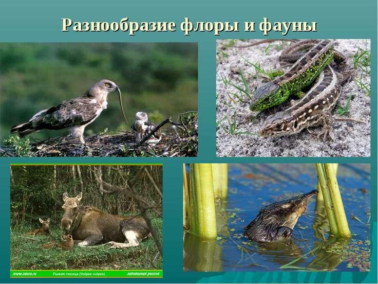 Разнообразие флоры и фауны