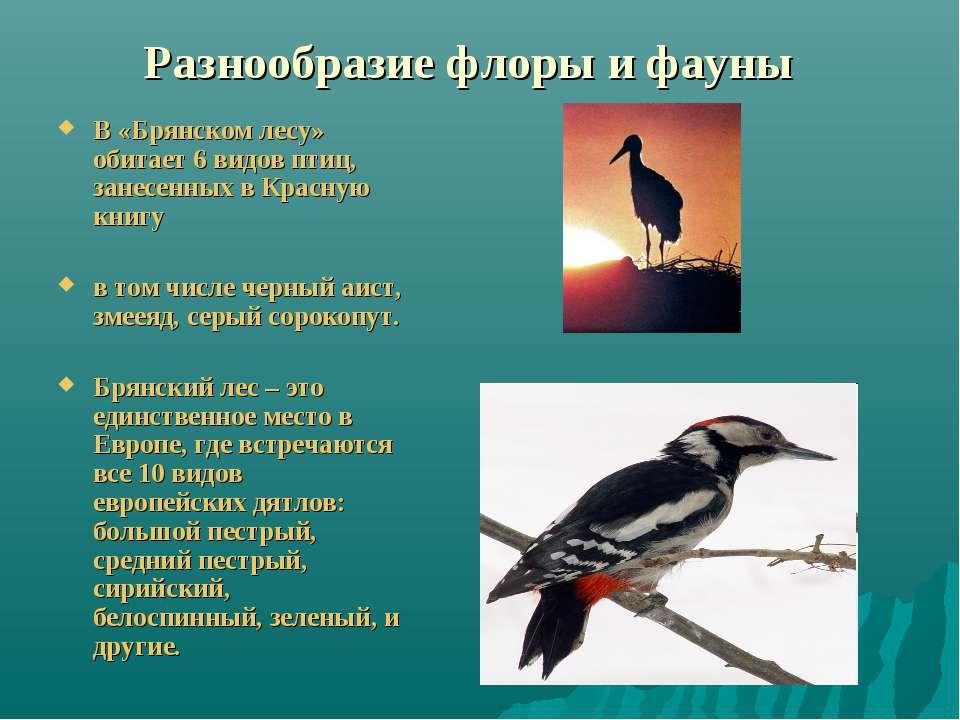 Разнообразие флоры и фауны В «Брянском лесу» обитает 6 видов птиц, занесенных...