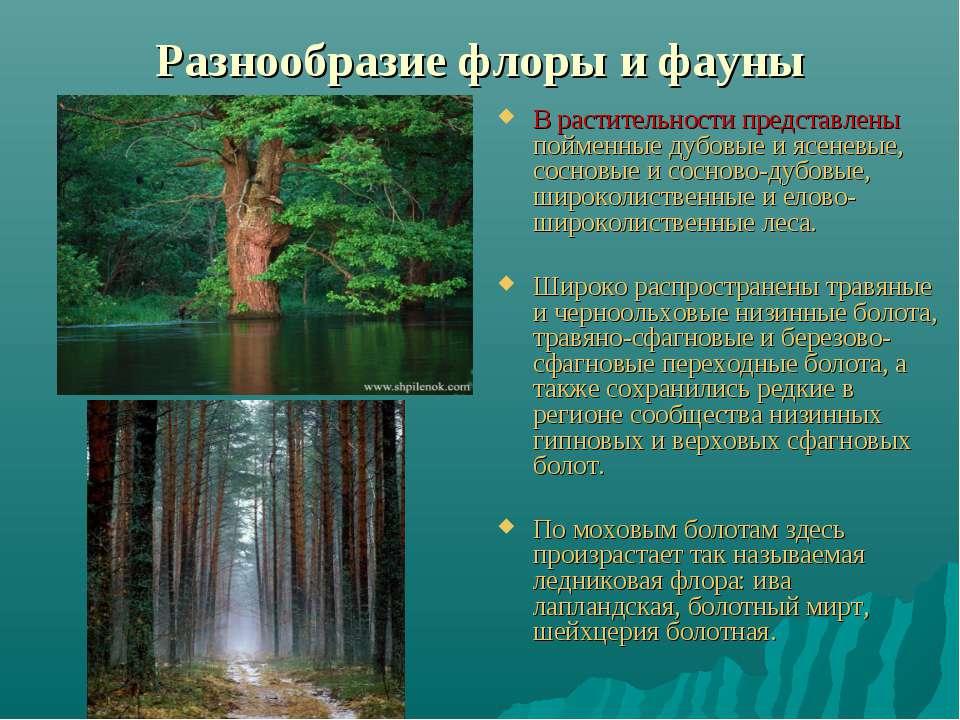 Разнообразие флоры и фауны В растительности представлены пойменные дубовые и ...
