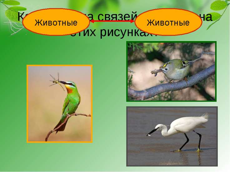 Какая группа связей показана на этих рисунках? Животные Животные