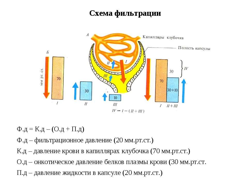 Схема фильтрации Ф.д = К.д – (О.д + П.д) Ф.д – фильтрационное давление (20 мм...