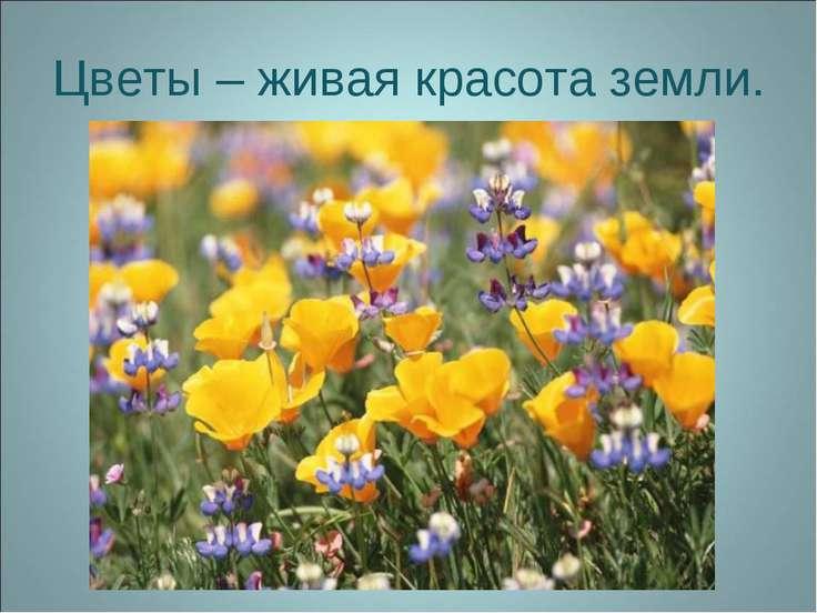 Цветы – живая красота земли.