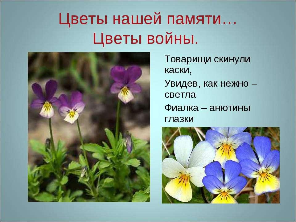 Цветы нашей памяти… Цветы войны. Товарищи скинули каски, Увидев, как нежно – ...