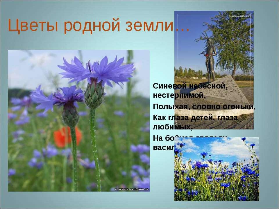 Цветы родной земли… Синевой небесной, нестерпимой, Полыхая, словно огоньки, К...
