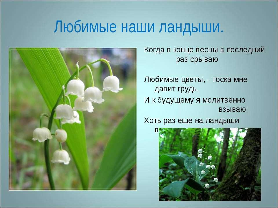 Любимые наши ландыши. Когда в конце весны в последний раз срываю Любимые цвет...