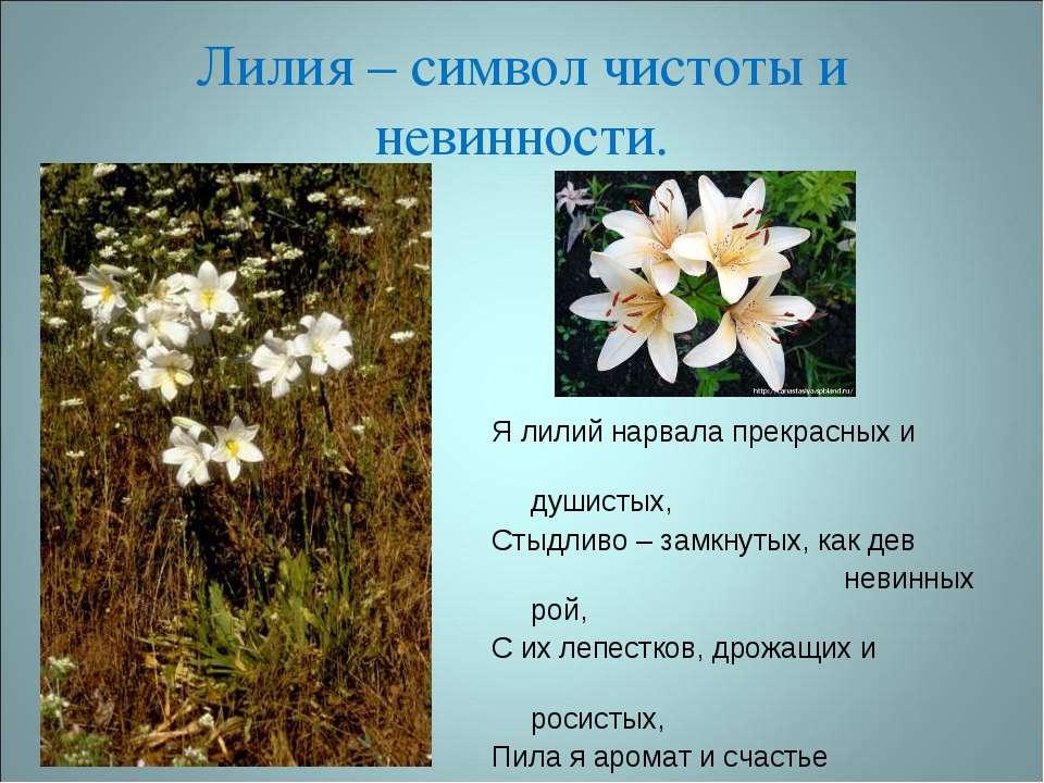 Лилия – символ чистоты и невинности. Я лилий нарвала прекрасных и душистых, С...