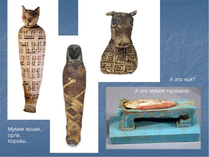 Мумии кошки, орла, Коровы… А это чья? А это мумия таракана!