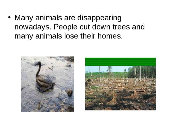 Many animals are disappearing nowadays. People cut down trees and many animal...