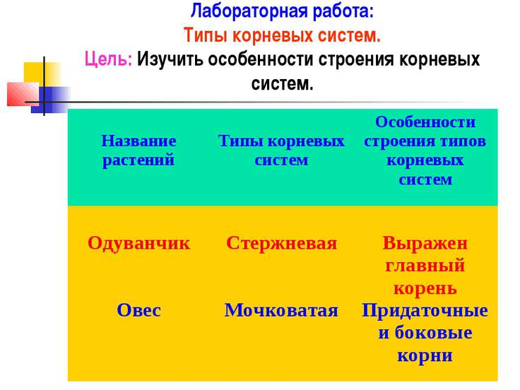 Лабораторная работа: Типы корневых систем. Цель: Изучить особенности строения...