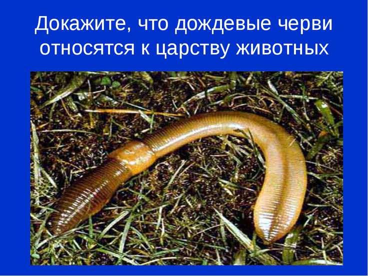Докажите, что дождевые черви относятся к царству животных