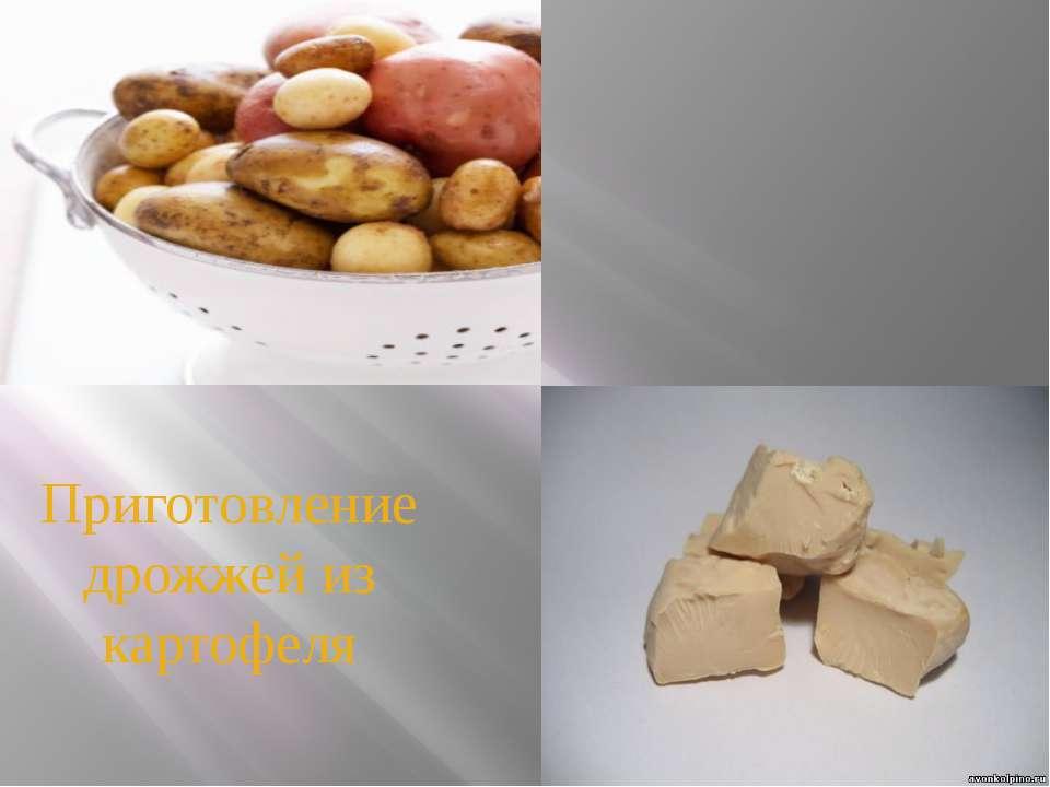 Приготовление дрожжей из картофеля