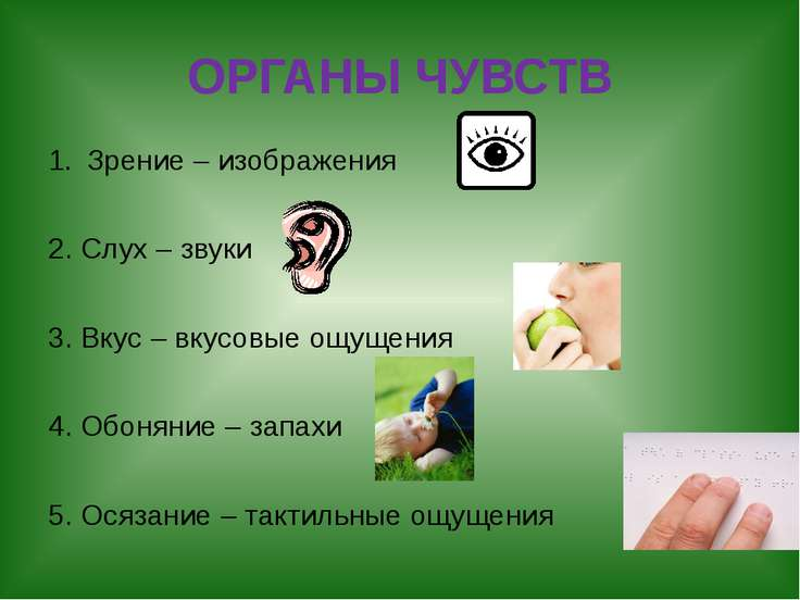 ОРГАНЫ ЧУВСТВ Зрение – изображения 2. Слух – звуки 3. Вкус – вкусовые ощущени...