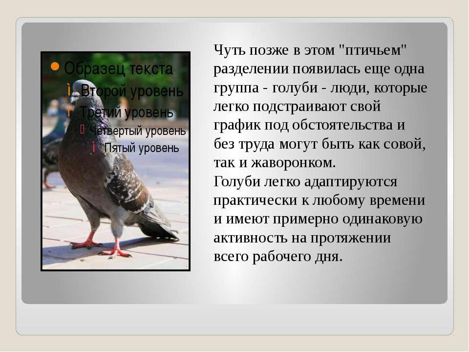 """Чуть позже в этом """"птичьем"""" разделении появилась еще одна группа - голуби - л..."""