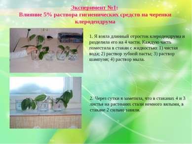 Эксперимент №1: Влияние 5% раствора гигиенических средств на черенки клероден...